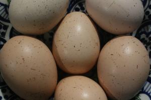eggs_9_10may_2016